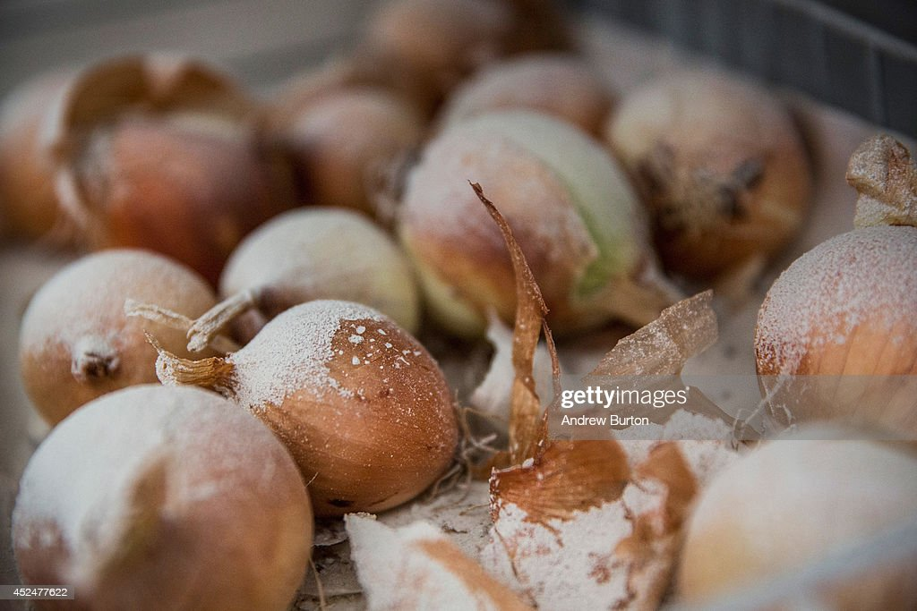 Dust covers onions in an Israeli home hit by a Hamas rocket on July 21, 2014 in Sderot, Israel. Yesterday marked the bloodiest day of the operation 'Protective Edge' yet, as 13 Israeli soldiers died and the death toll in Gaza passed 500 people.