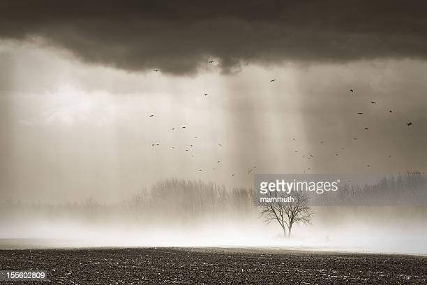 dust storm with flock of birds
