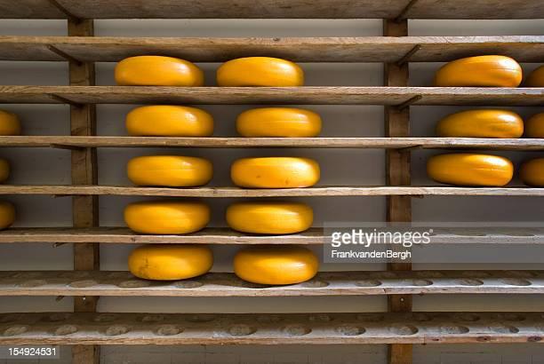 Dutch Cheese