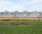 dutch greenhouse with lights on in the netherlands near almere in flevoland
