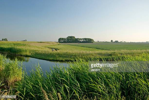 Dutch Polder Scene