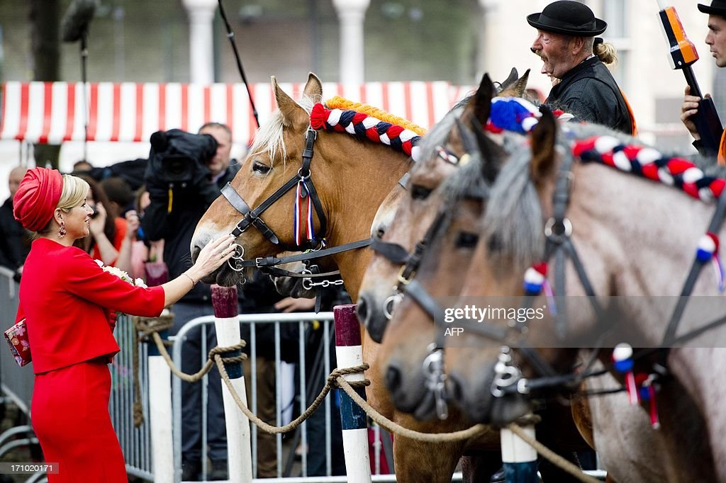 Dutch Queen Maxima pets a horse on June 21, 2013 in Middelburg in Zeeland province. It is the last visit of the Dutch royal to all 12 Dutch provinces to give people a chance to meet the new king and queen. WEEL- netherlands out -
