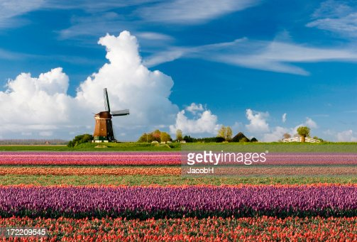 Dutch Spring Landscape