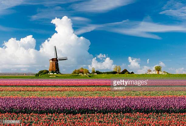 Dutch paysage de printemps