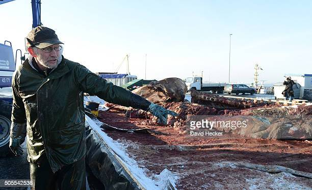 Dutch taxidermist Aart Walen explains his work on one of two dead sperm whales that recently appeared on the beach of Wangerooge Island on January 18...
