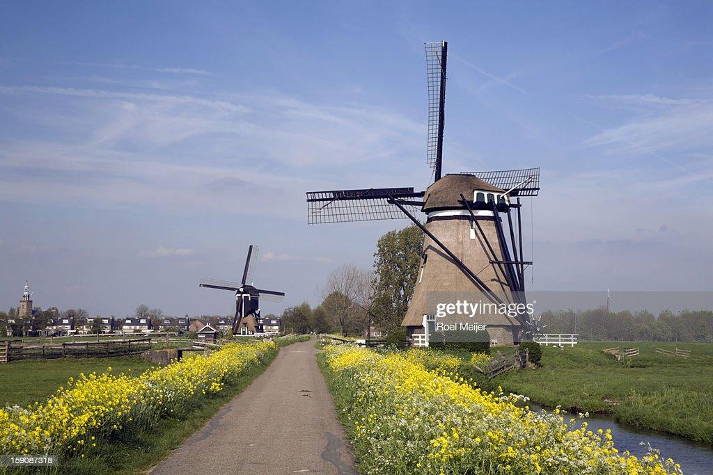Dutch windmills along a flower-lined road : Stock Photo