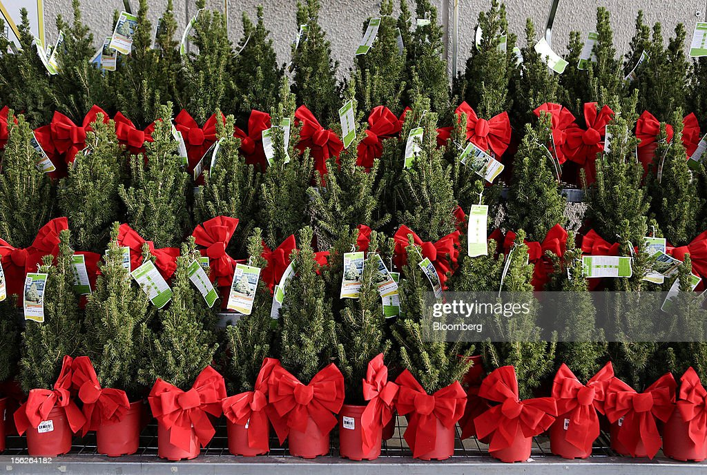 Dwarf Alberta spruce trees are displayed for sale at a Home Depot Inc. store in Washington, D.C., U.S., on Monday, Nov. 12, 2012. Home Depot Inc. is scheduled to release earnings data on Nov. 13. Photographer: Andrew Harrer/Bloomberg via Getty Images