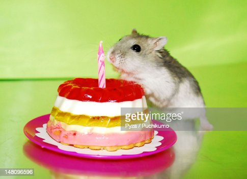 Dwarf Hamster With Birthday Cake Stock Photo Getty Images - Hamster birthday cake