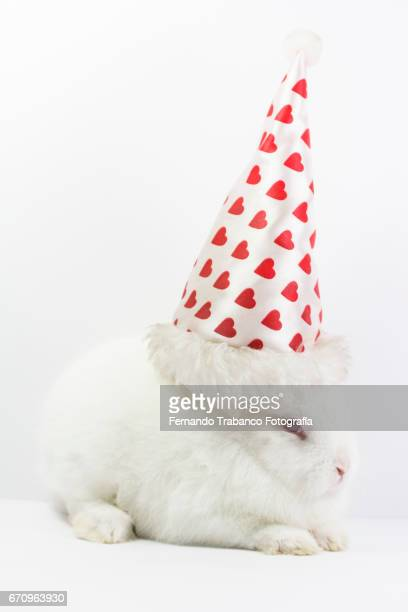 Dwarf rabbit in love disguised with a red hearts cap on Valentine's Day (Oryctolagus cuniculus domesticus)