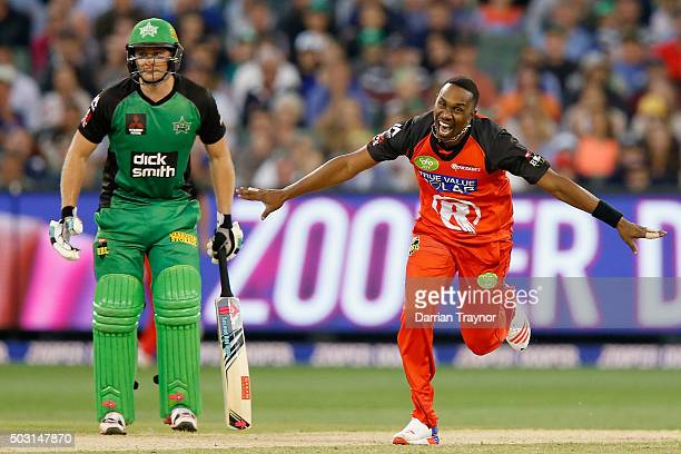 Dwayne Bravo of the Melbourne Renegades celebrates taking the wicket of Glenn Maxwell of the Melbourne Stars during the Big Bash League match between...
