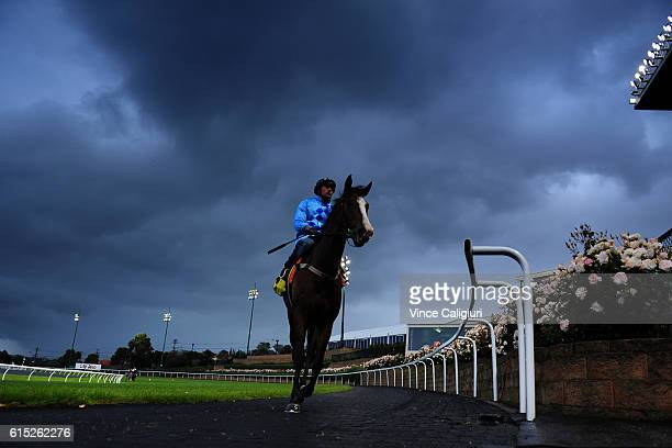 Dwayne Dunn riding Don't Doubt Mamma after galloping during Breakfast with the best at Moonee Valley Racecourse on October 18 2016 in Melbourne...