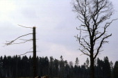 Dying of forests in the Eifel