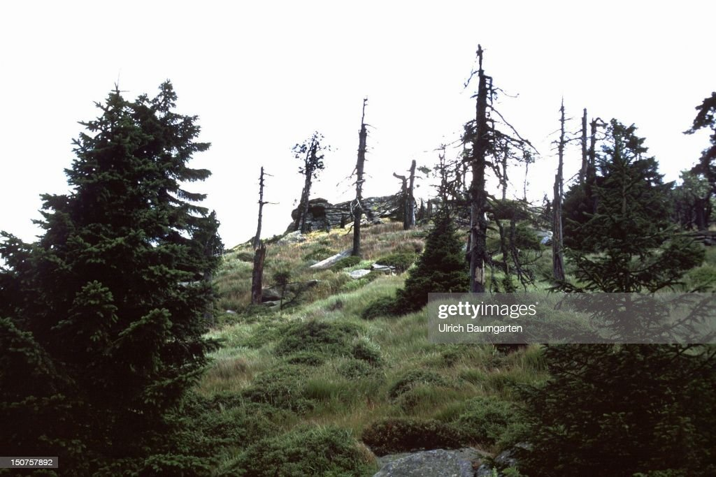 Dying of forests on the Brocken
