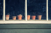 Dying plants on pots in window of old vintage potting shed