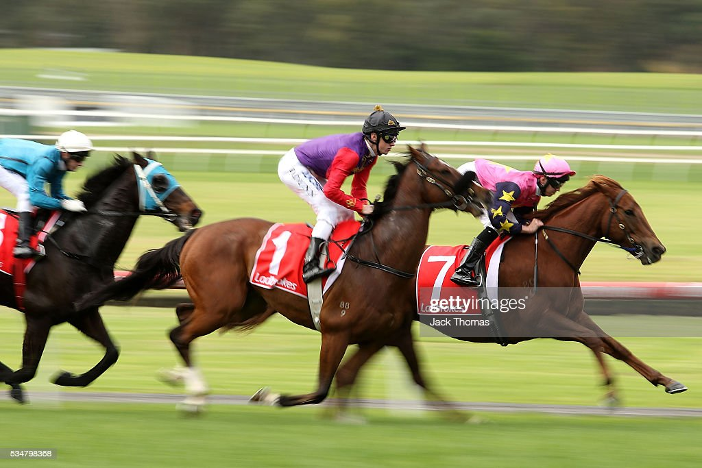 Dylan Dunn riding Bold Sniper (1) in the first lap before winning Race 3 during Melbourne Racing at Sandown Lakeside on May 28, 2016 in Melbourne, Australia.