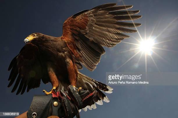 Eagle Backlight