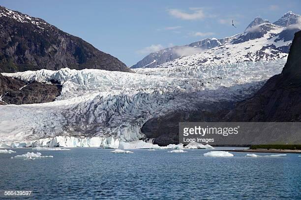 Eagle flying above the Mendenhall Glacier in Alaska
