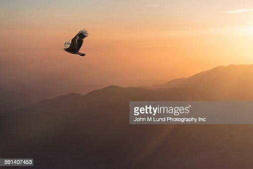 Eagle flying in sunrise sky over remote landscape