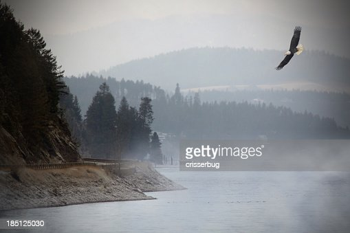Eagle Flying over Lake.
