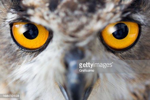 Eagle owl details of eyes