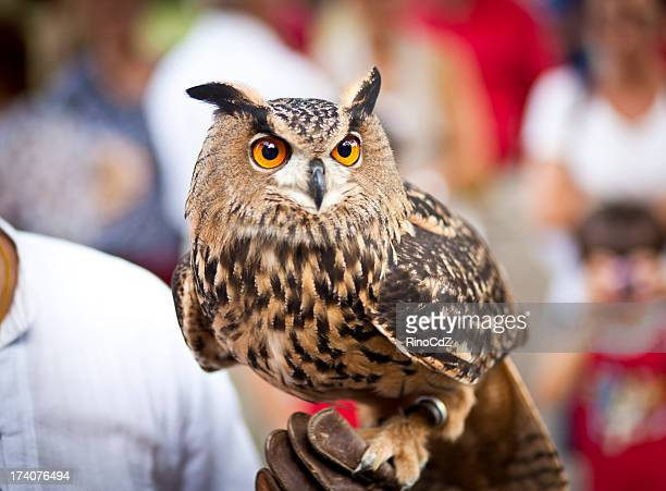 Eagle Owl On Hand