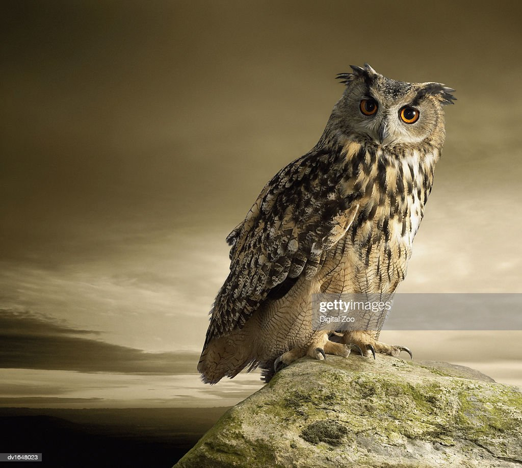 Eagle Owl Standing Full Length on a Rock : Stock Photo