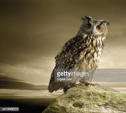 Eagle Owl Standing Full Length on a Rock : Photo