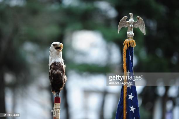 Eagles adorn flag poles are seen during a protest showing solidarity with the 'Native Nations Rise' march on Washington DC against the construction...