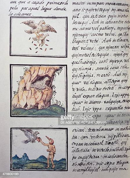 Eagles page from the Florentine Codex bilingual version in Spanish and Nahuatl General History of the Things of New Spain by the Spanish missionary...