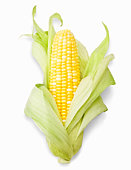 Ear of corn, close-up, studio shot