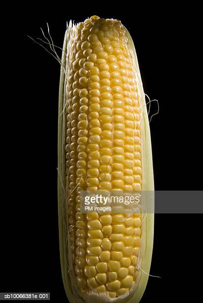 Ear of corn on black background