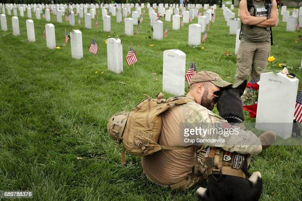 Earl Granville sits for a quiet moment with Zoe a friend's 2yearold assistance huskie dog in Section 60 at Arlington National Cemetery on Memorial...