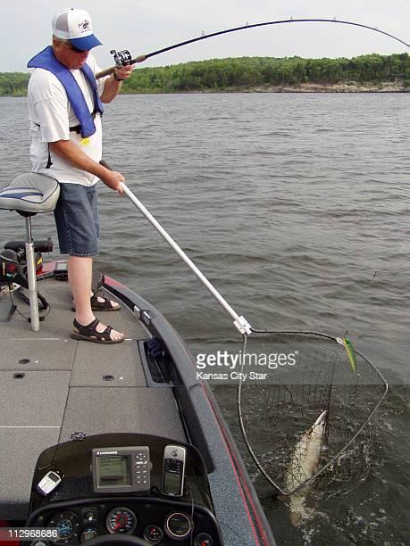 Earle Hammond lands a 38inch muskie at Pomme de Terre Lake in the Ozarks in Missouri June 10 2007