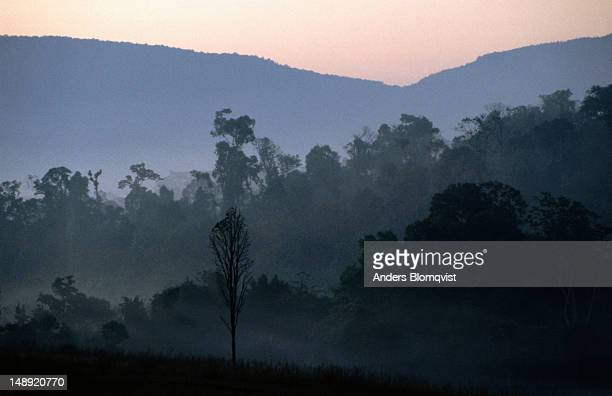 Early evening light falls on the Khao Yai forest