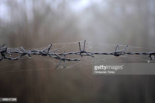 Early morning dew fallen on a spider's web on barbwire on November 28 2015 in Greater Noida India Dense fog continued to disrupt normal life in North...