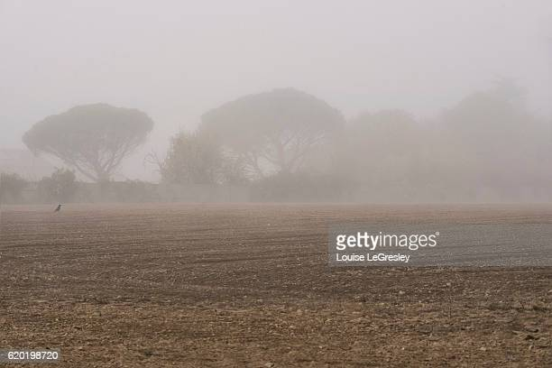 Early morning fog over a field with a crow and trees in the background