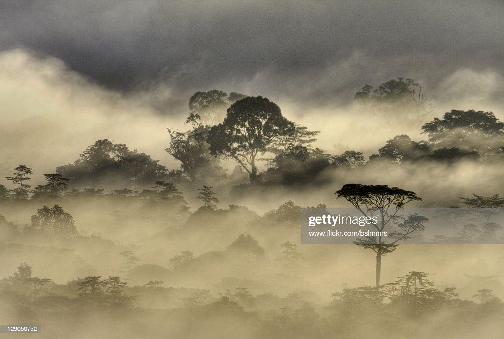 Early morning mist on Mulu jungle