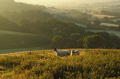Early morning over Marshwood Vale seen from Colmer's Hill in Devon, England