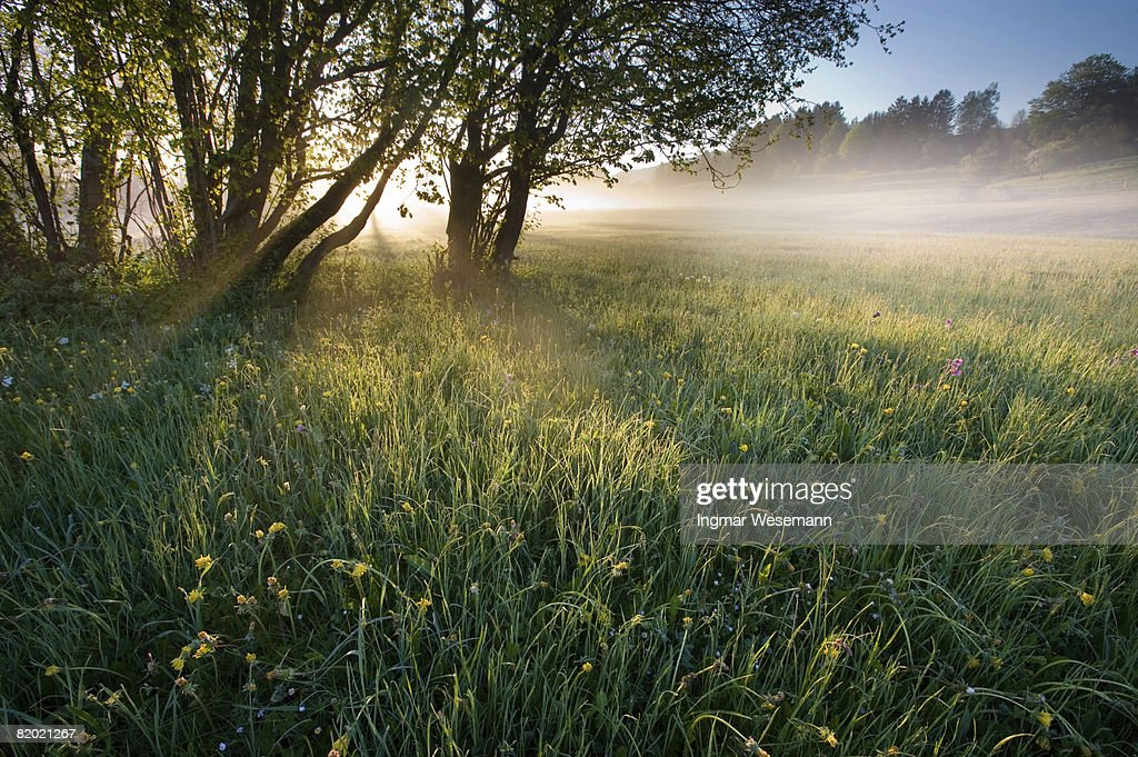 early morning : Stock Photo