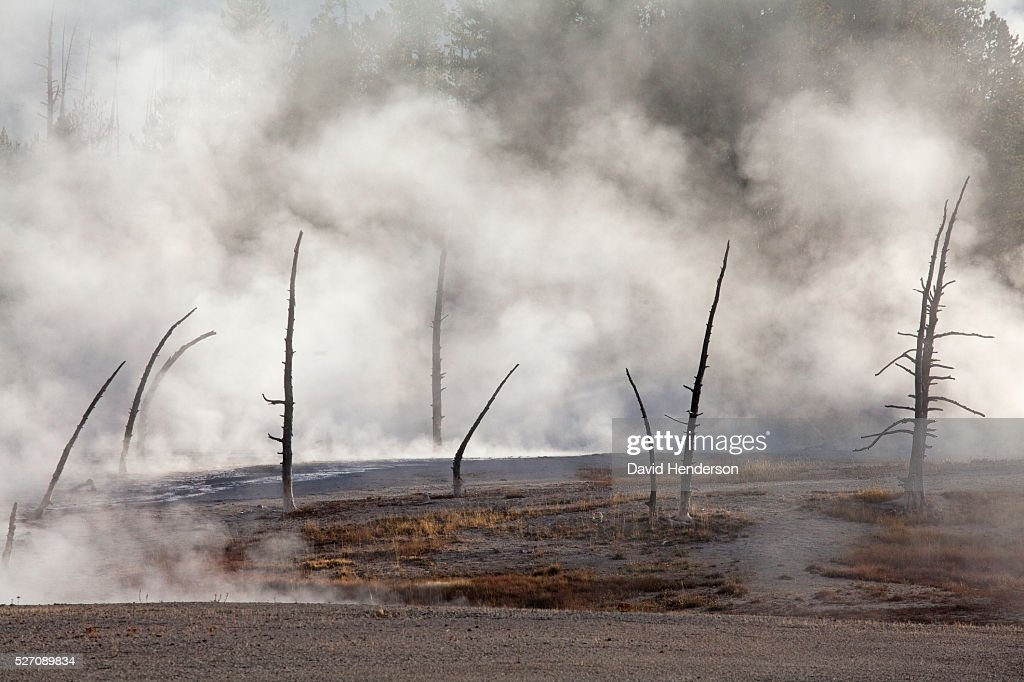 Early morning steam and calcified trees, Wyoming, USA : Stock-Foto