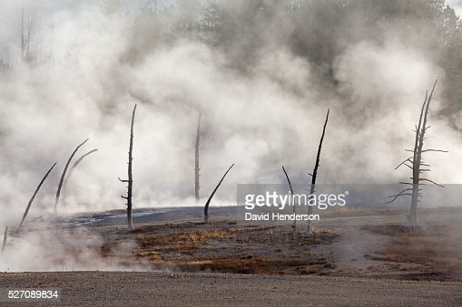 Early morning steam and calcified trees, Wyoming, USA : Stock Photo