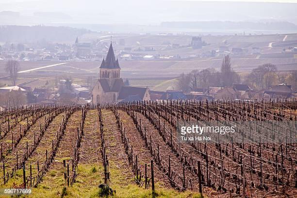 Early season in French champagne region