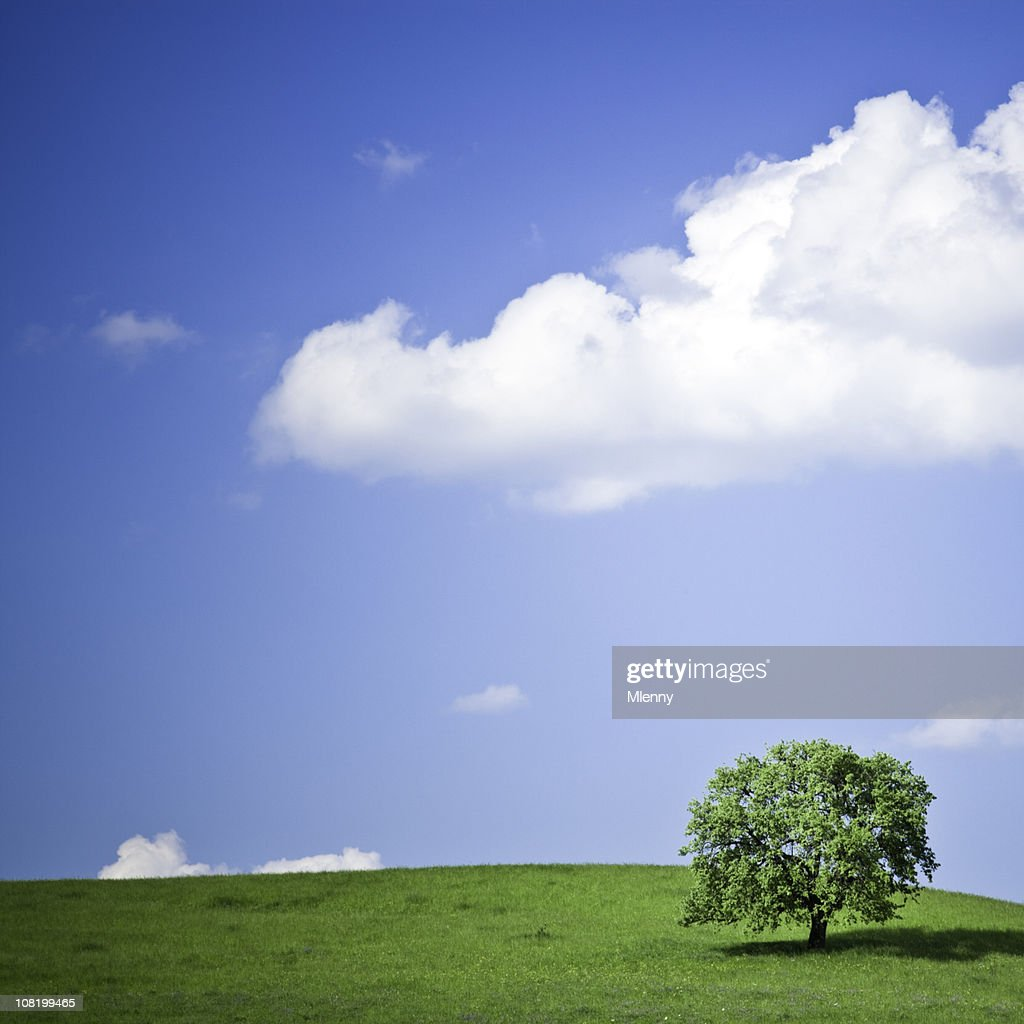 Early Summer : Stock Photo