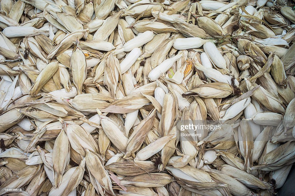 Ears of harvested corn lie in a tractor trolley in the district of Burhanpur, Madhya Pradesh, India, on Thursday, Oct. 18, 2012. India is Asia's biggest grower of corn after China. Photographer: Sanjit Das/Bloomberg via Getty Images