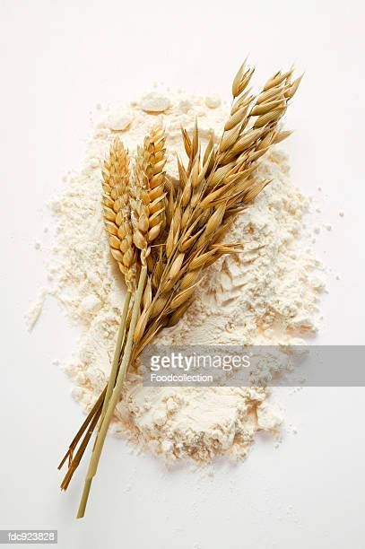 Ears of wheat and oats on flour