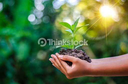 Earth Day In the hands of trees growing seedlings. Bokeh green Background Female hand holding tree on nature field grass Forest conservation concept : Foto de stock