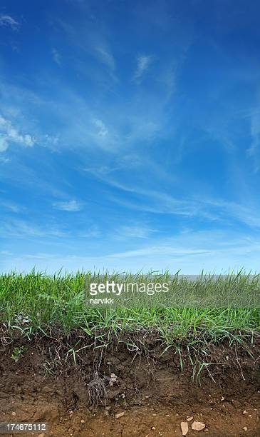 Earth, Green Grass and Blue Sky