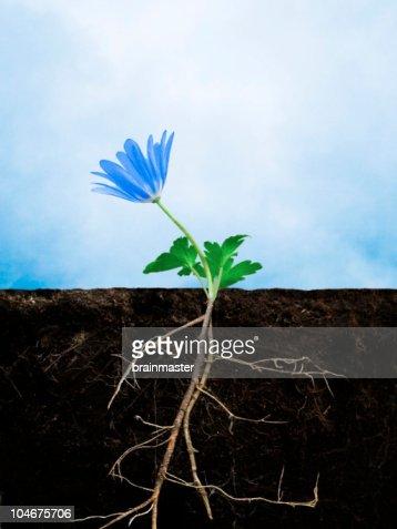 Earth growing flower