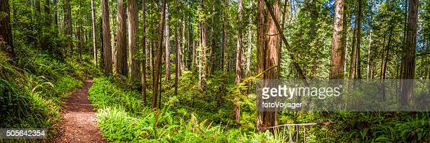 Erde trail durch idyllische Sequoia grove Redwood NP forest, Kalifornien