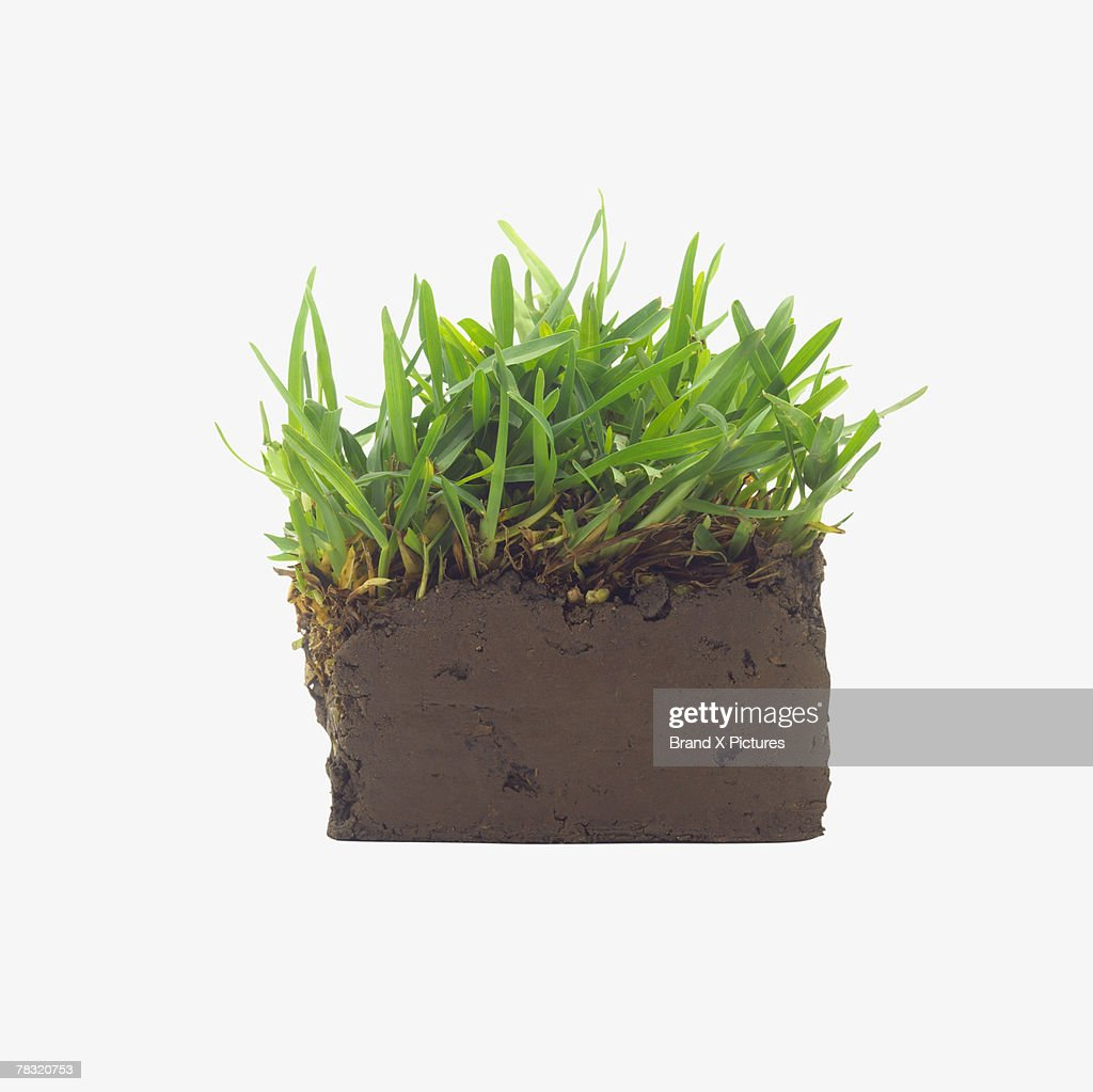Earth with growing grass : Stock Photo